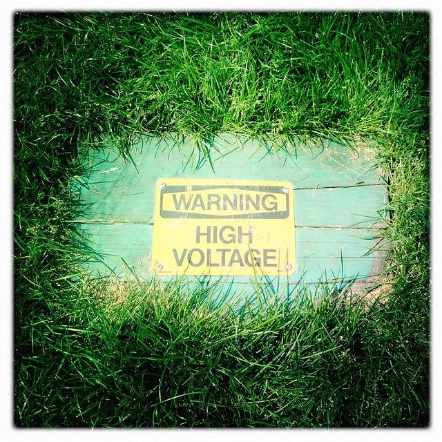 High Voltage Grass