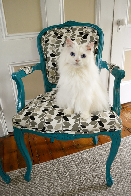 DIY Chair Makeover- Ozzy
