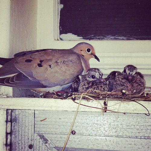 Birdy babies!!