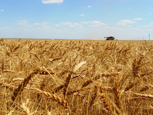Harvesting away