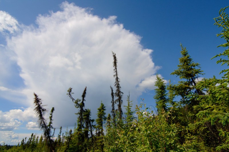 boreal forest and a storm