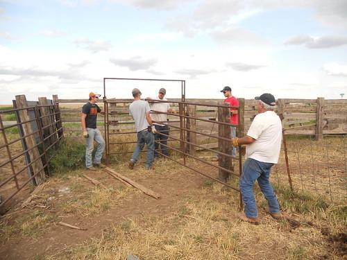 Playing cowboy