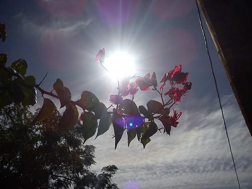 flower in the sun by SoulRiser