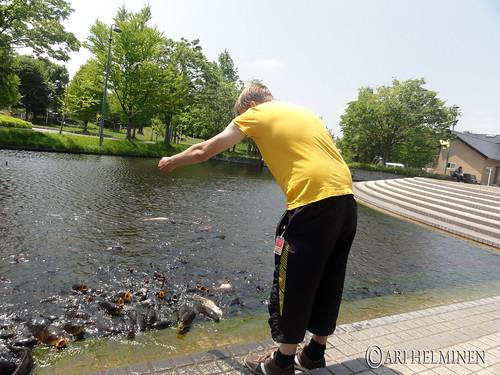 Feeding Koi 青森の鯉