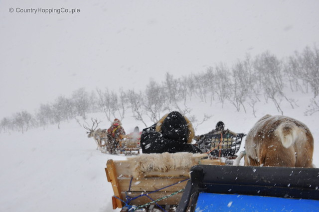 Reindeer Sledging during snow - quite an experience