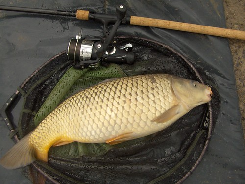 This nice common carp was just under 7lb by La belle dame sans souci