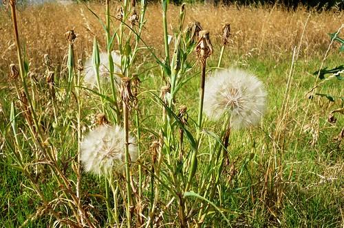 Weeds by joespake