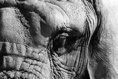 Zoo in black and white by Roger's Eye <(r)>