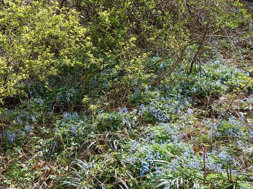Frühjahrsgeophyten