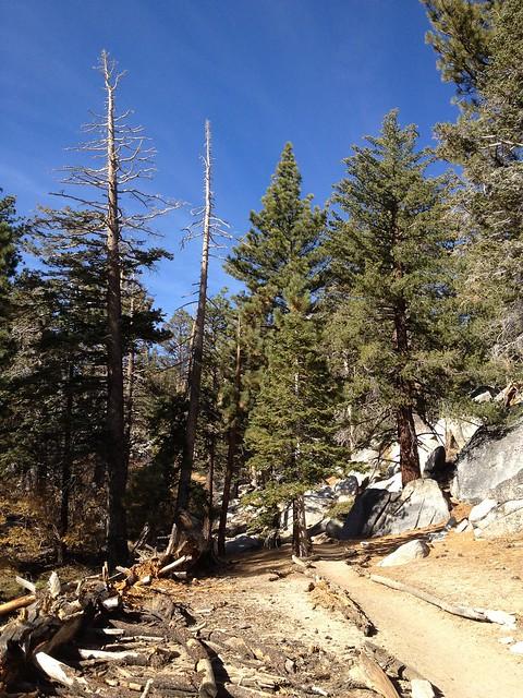 Mt. San Jacinto trail