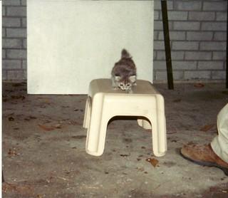 Gracie as Kitten 1995