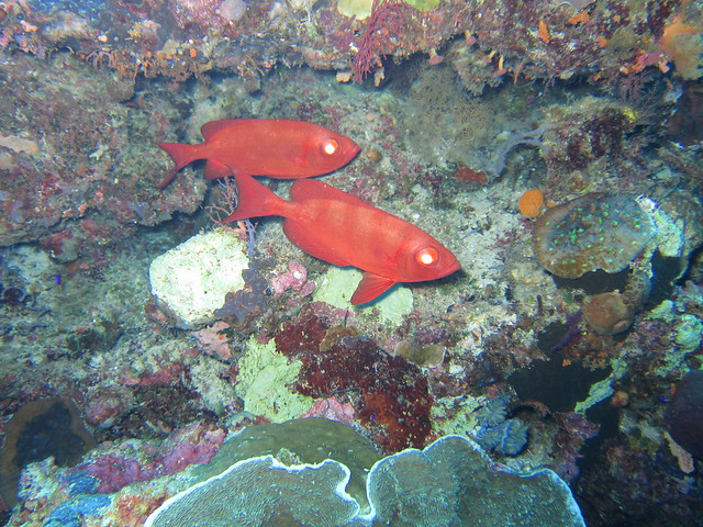 Wakatobi: Colours of the Reef (5/6)