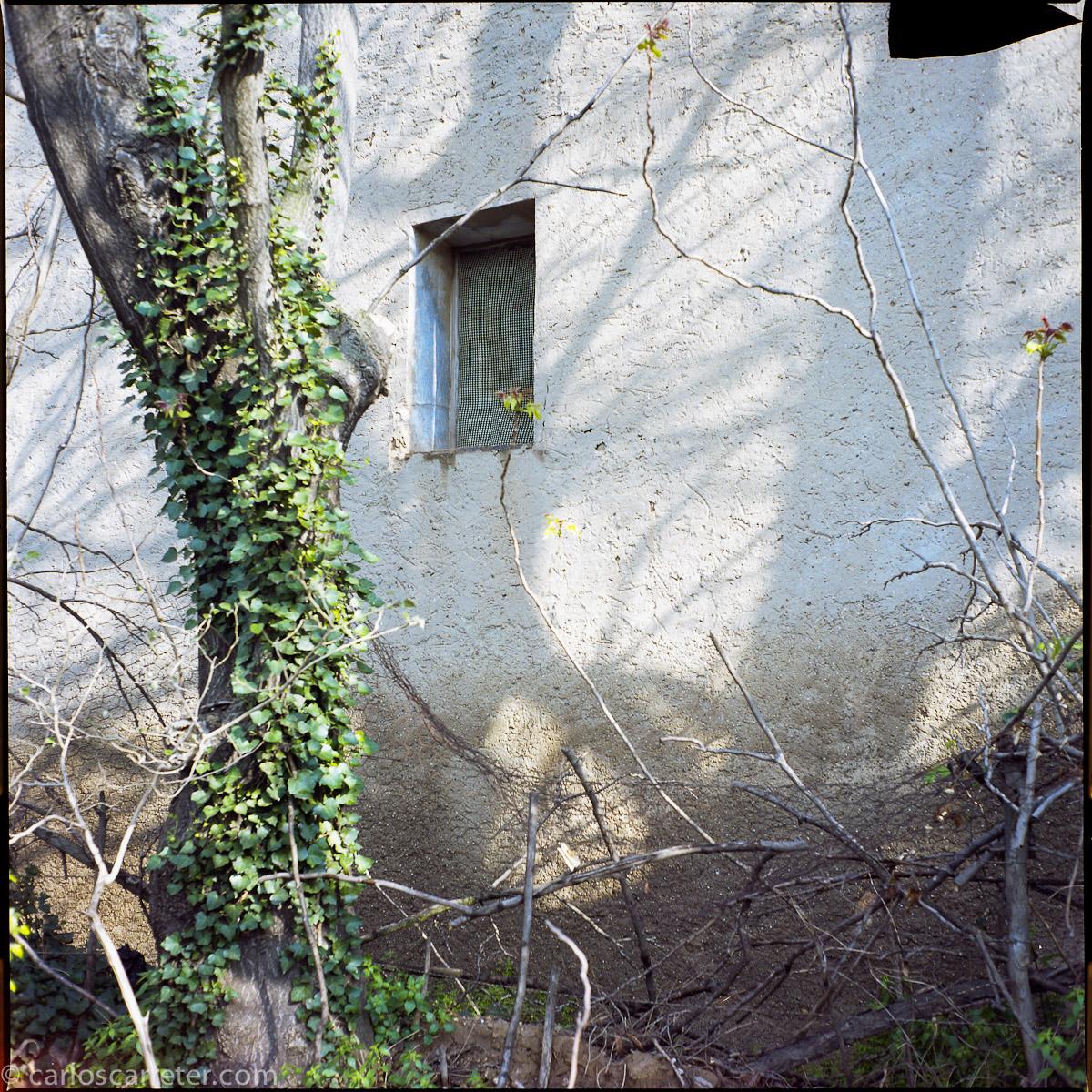 Árbol y pared