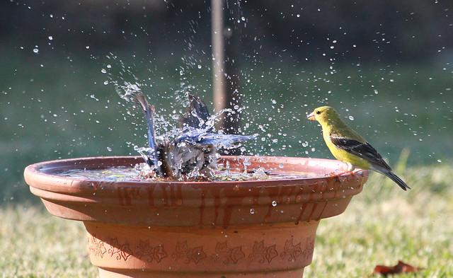 Splash!  06/08/12