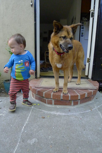Dog and baby
