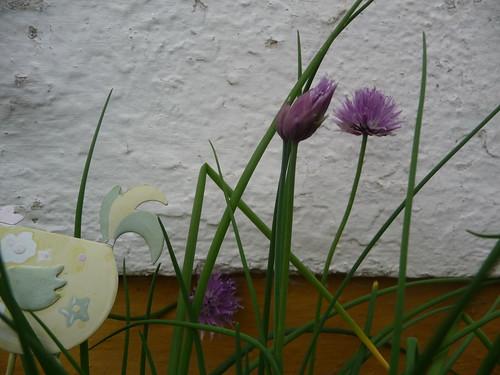 flor de cebolinho