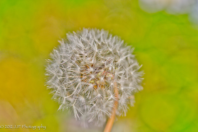 2012_Jun_11_Front Yard Macro_033