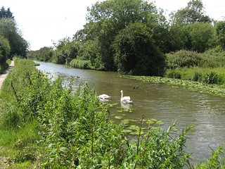 12. Chichester Canal (1)