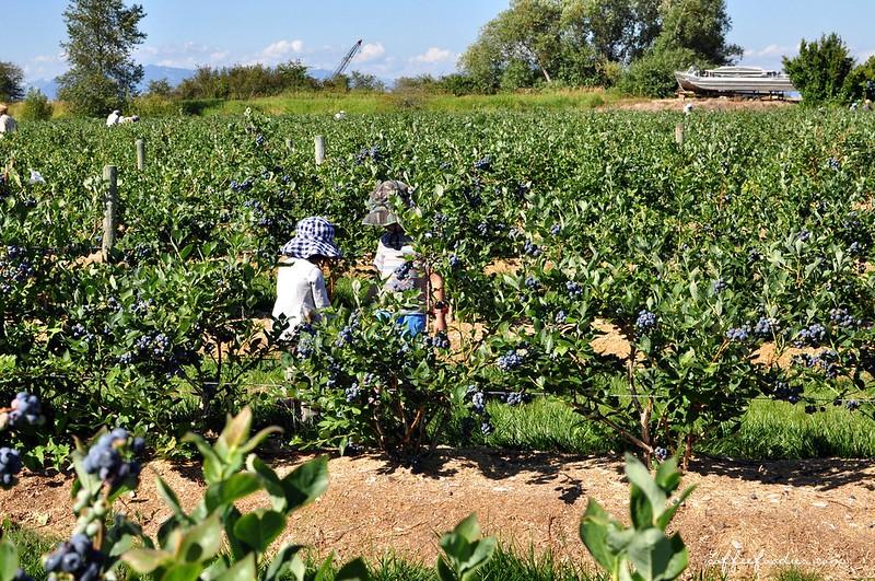 Emma Lea Farms Delta BC 00009