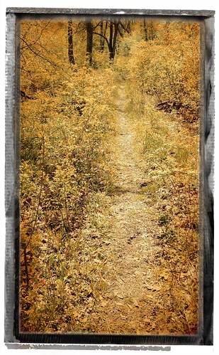 The path less traveled, at Herrick Lake Forest Preserve