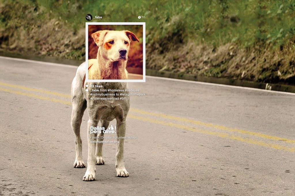 Dallas Pet Alive - Dog Profile 1