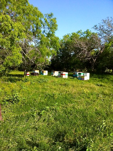 Runge Clover Field Hives 2