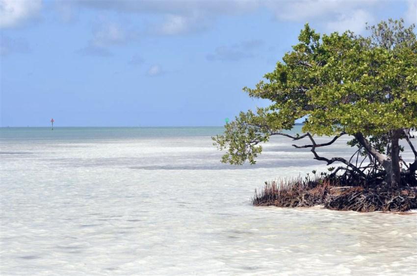 Cristalinas aguas que rodean la Overseas Higway 1 en nuestro camino hacia Key West Florida Keys, carretera al paraíso (mejor con un Mustang) Florida Keys, carretera al paraíso (mejor con un Mustang) 7214504474 7ce217b314 o