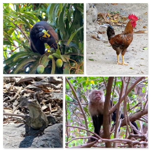 Animales Montezuma