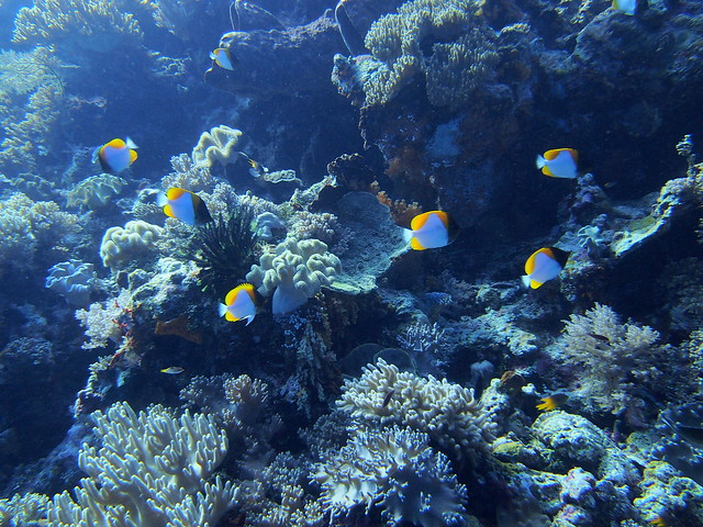 Wakatobi: Colours of the Reef (4/6)