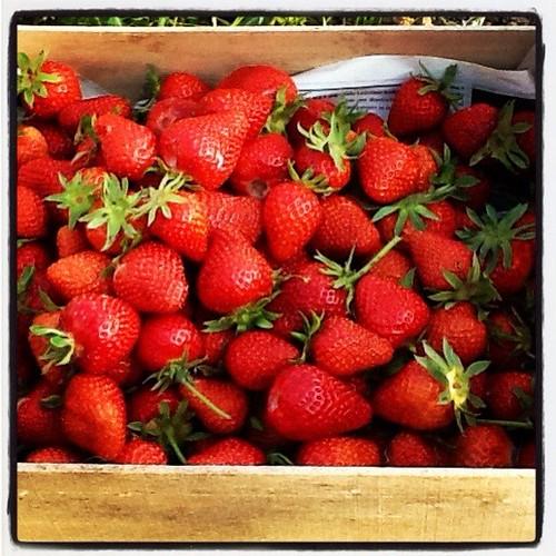 Aardbeien pluk 1