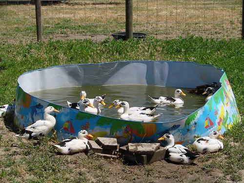 DucksPond2
