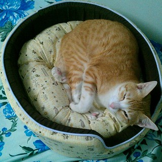 Hoshi's new bed