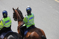 Police horse and rider
