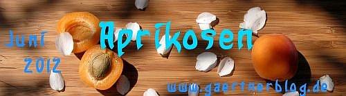 Garten-Koch-Event Juni 2012: Aprikosen [30.06.2012]