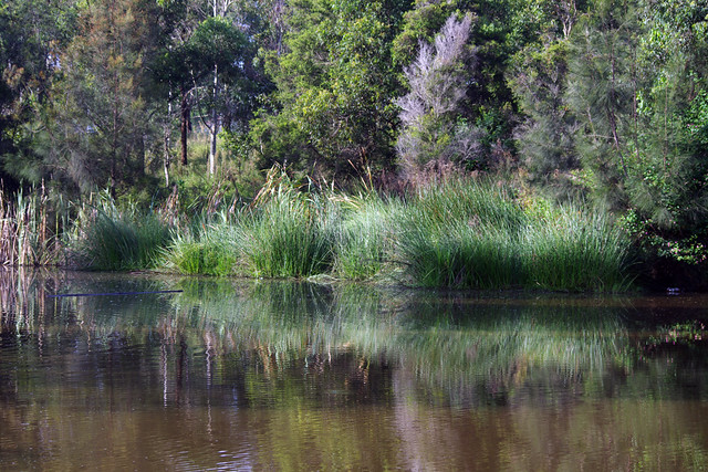 Early Pond Reflections