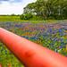 JVP_20120413_BluebonnetTrail7058