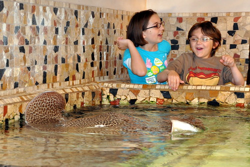 sting ray touch tank