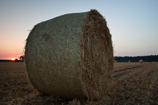 Bale of Straw in the Morninglight
