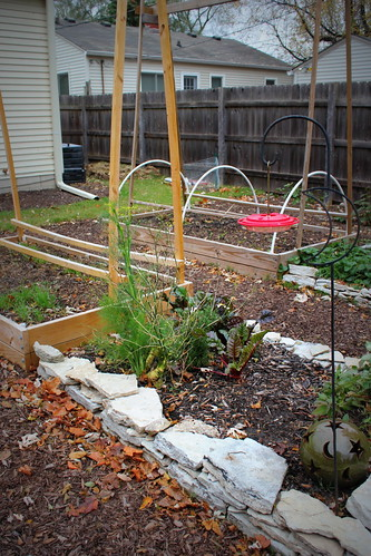 20121103. Winter beds.