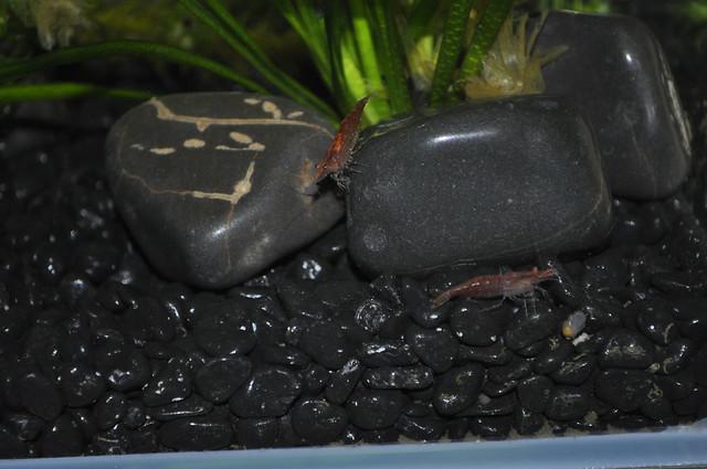 2012-11-03 fish 06