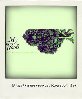 blog3-pola