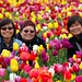 Tulipfest - Woodburn Oregon