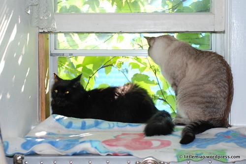 kemi and chun in window