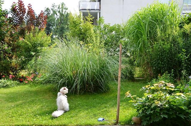 Fluffy in the garden