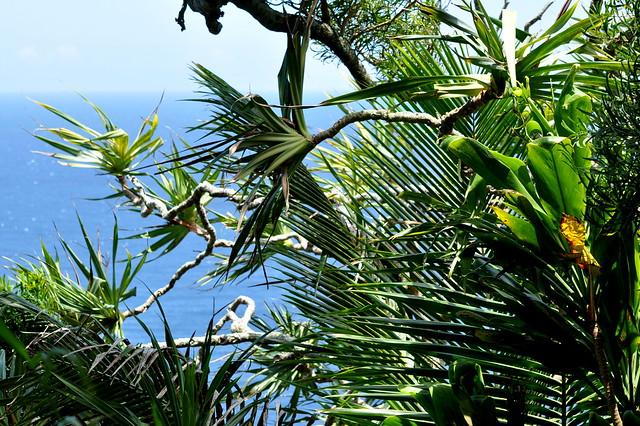 palms + pacific