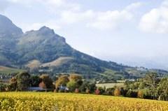 Stellenbosch Wine Country