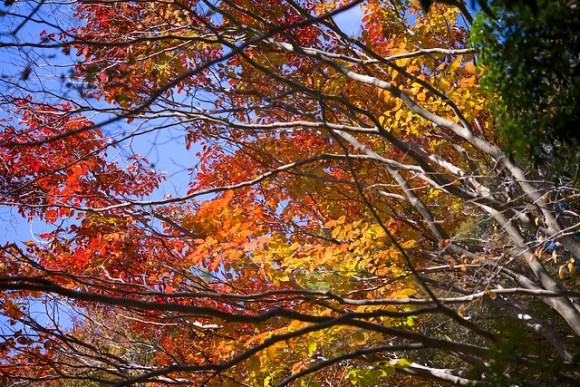 121103_coloredleaves04