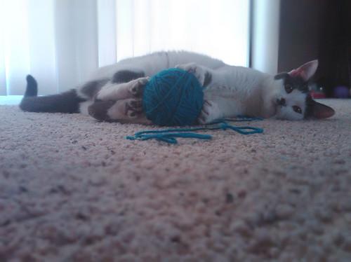 Cat Pissing Yarn