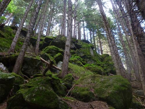 Foresta fatata