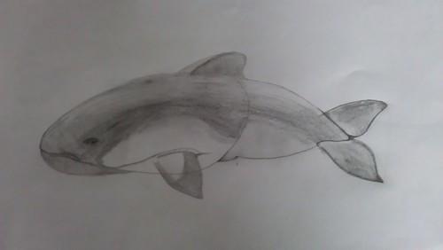 Popp's Harbour Porpoise sketch